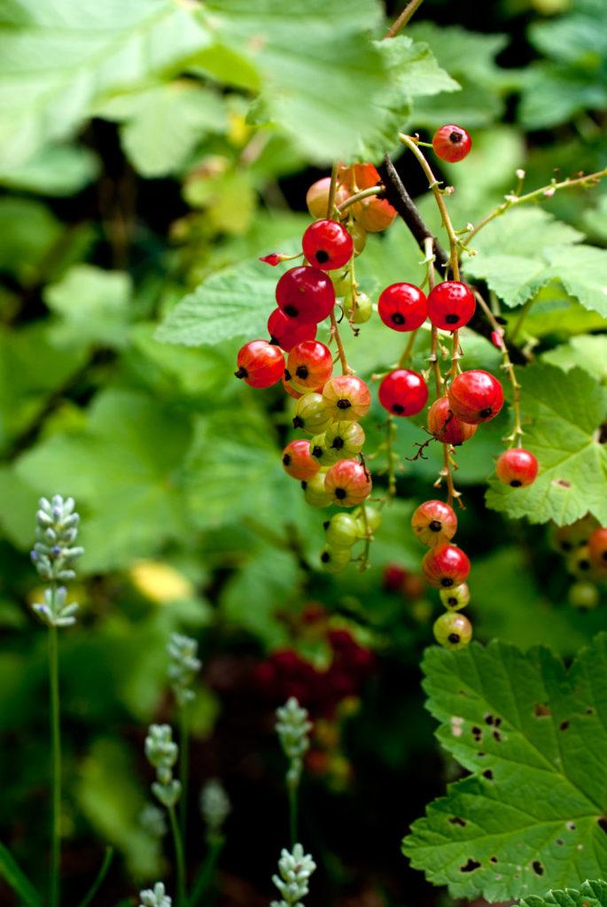 Sommer-Hits: Erdbeerbeet anlegen 5