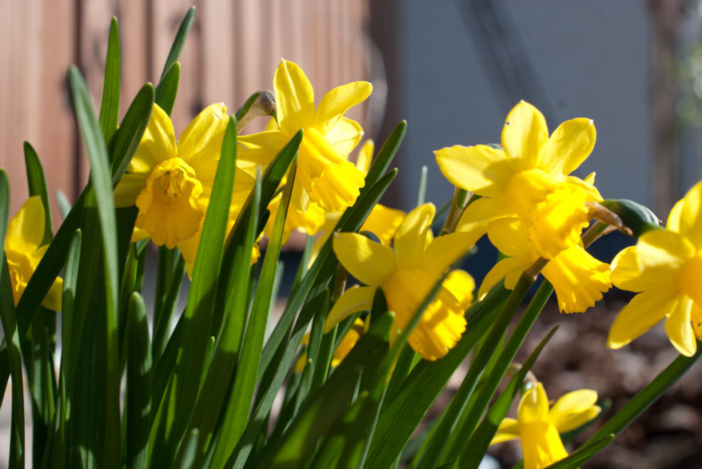 Frühling im Garten - Mamablog