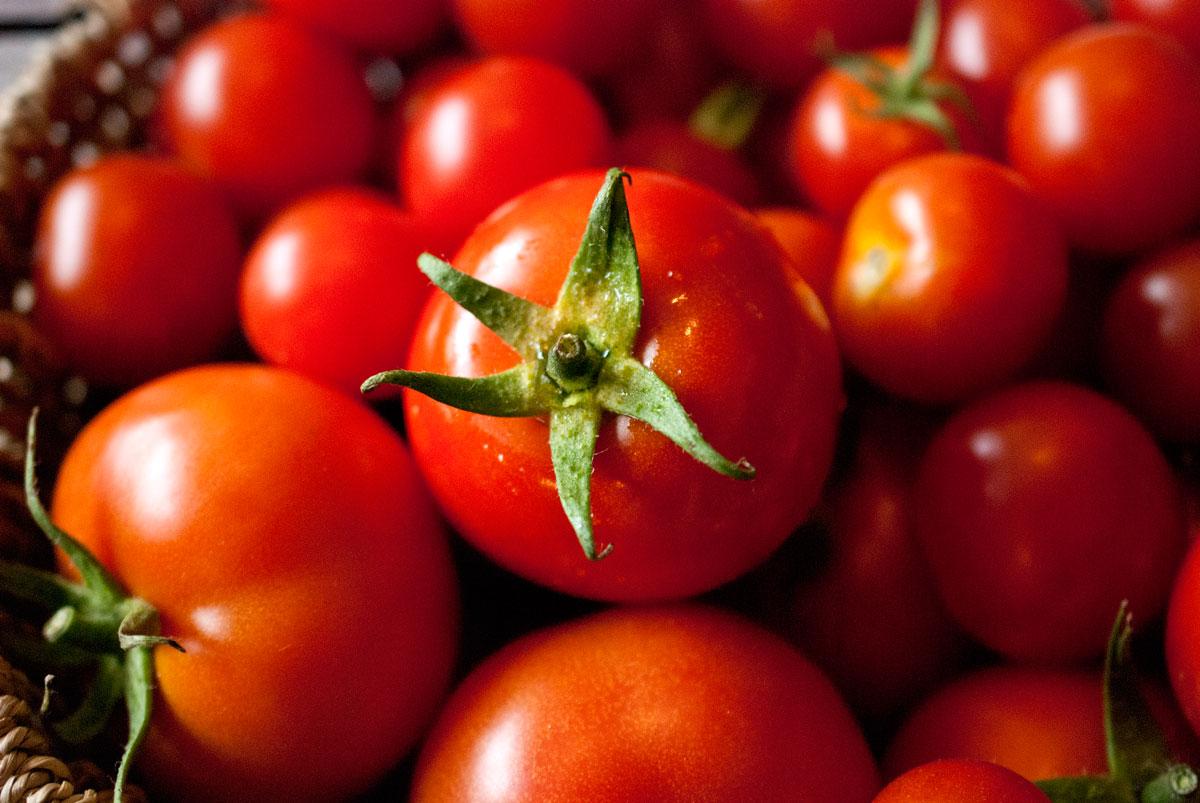 tomaten nachhaltig leben als familie