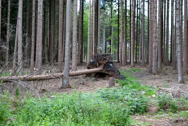 Familienausflug NRW: 3 Wandertipps für OWL 9