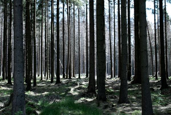 Familienausflug NRW: 3 Wandertipps für OWL 10