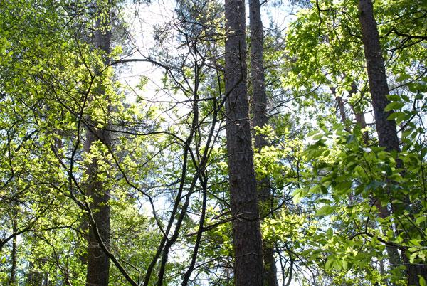 Familienausflug NRW: 3 Wandertipps für OWL 15